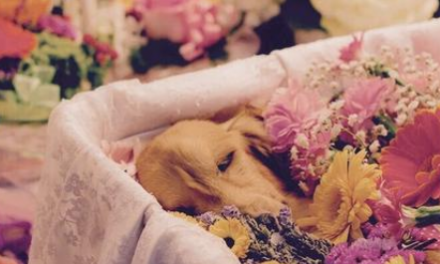The Bumpy Last Mile: Pet Interment and Its Issues in China